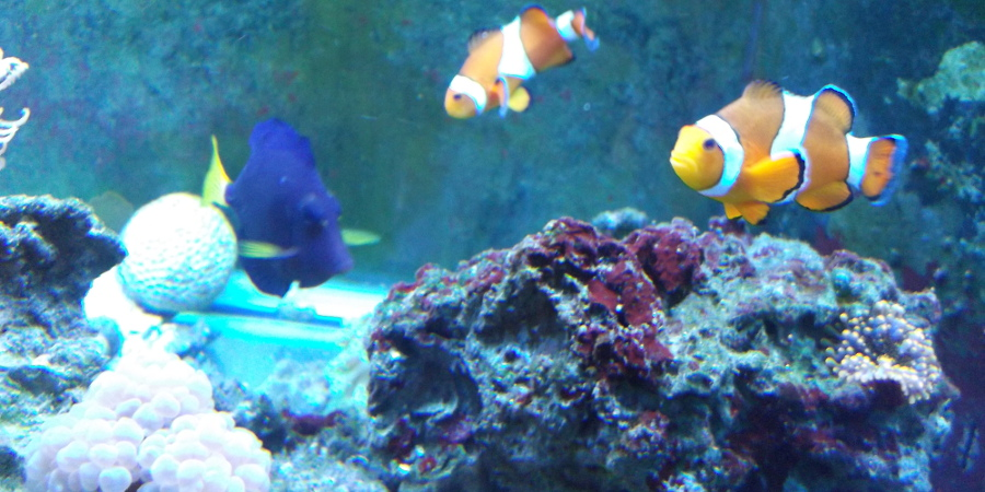 Freshwater Tropical, Saltwater Marine, Pond Fish, Aquariums, Live Corals and Plants