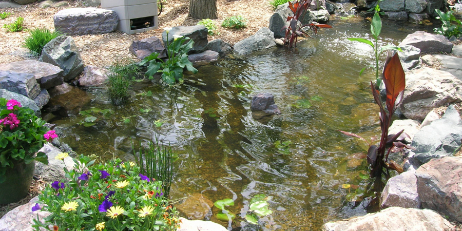 Large Backyard Garden Fish Pond